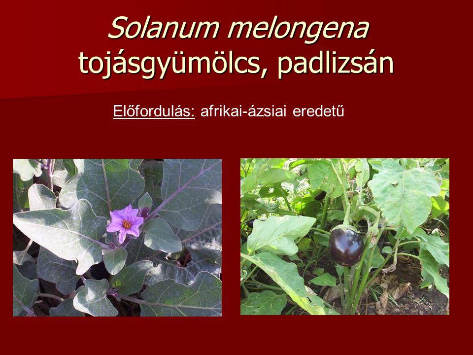Solanum melongena tojásgyümölcs, padlizsán Előfordulás: afrikai-ázsiai eredetű