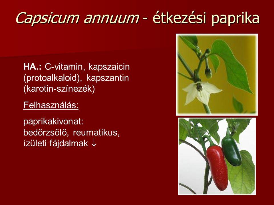 Capsicum annuum - étkezési paprika HA.: C-vitamin, kapszaicin (protoalkaloid), kapszantin (karotin-színezék) Felhasználás: paprikakivonat: bedörzsölő,