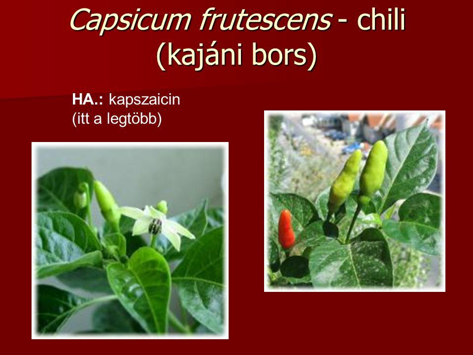 Capsicum frutescens - chili (kajáni bors) HA.: kapszaicin (itt a legtöbb)