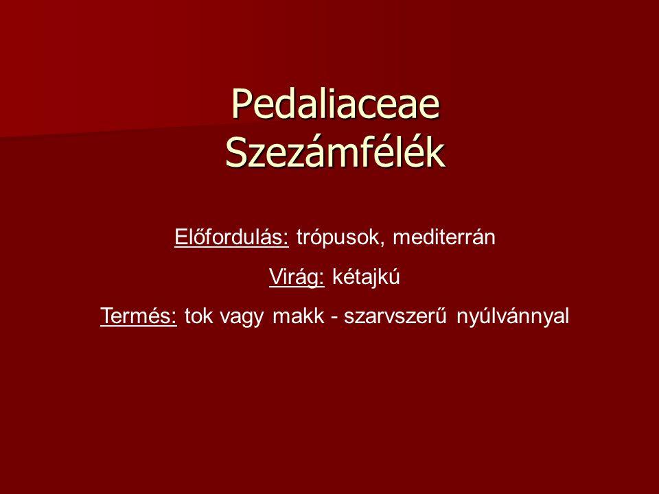 Pedaliaceae Szezámfélék Előfordulás: trópusok, mediterrán Virág: kétajkú Termés: tok vagy makk - szarvszerű nyúlvánnyal