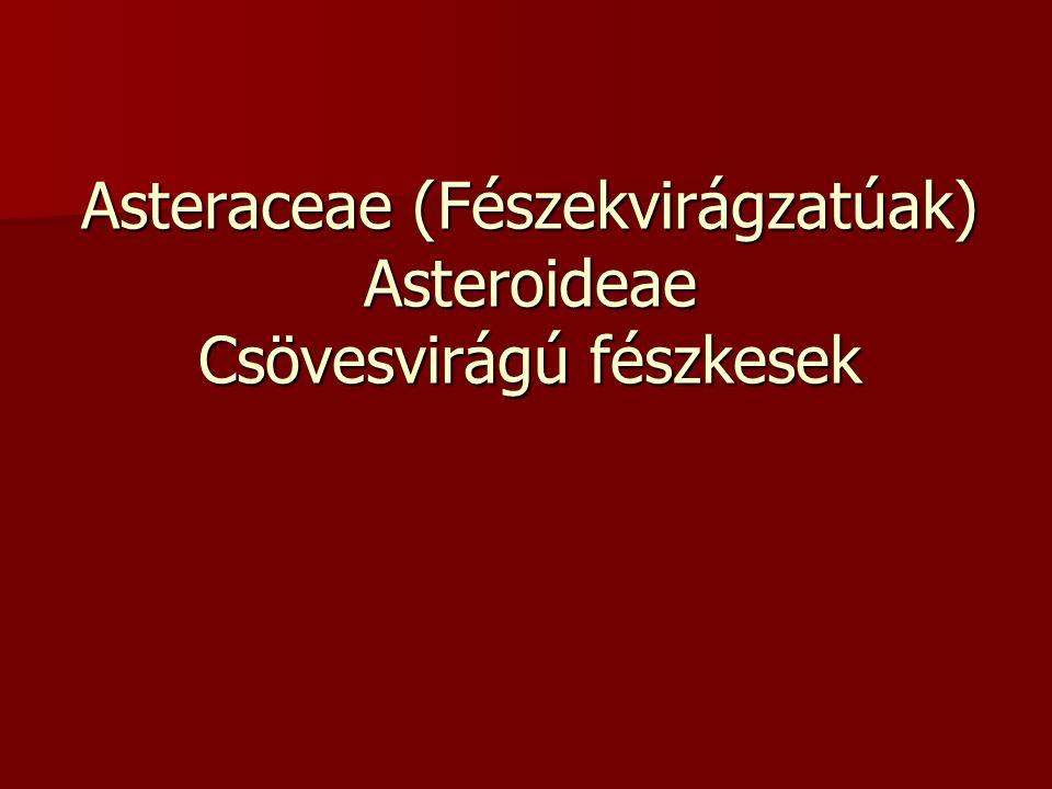 Asteraceae (Fészekvirágzatúak) Asteroideae Csövesvirágú fészkesek