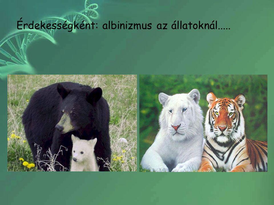 Érdekességként: albinizmus az állatoknál.....