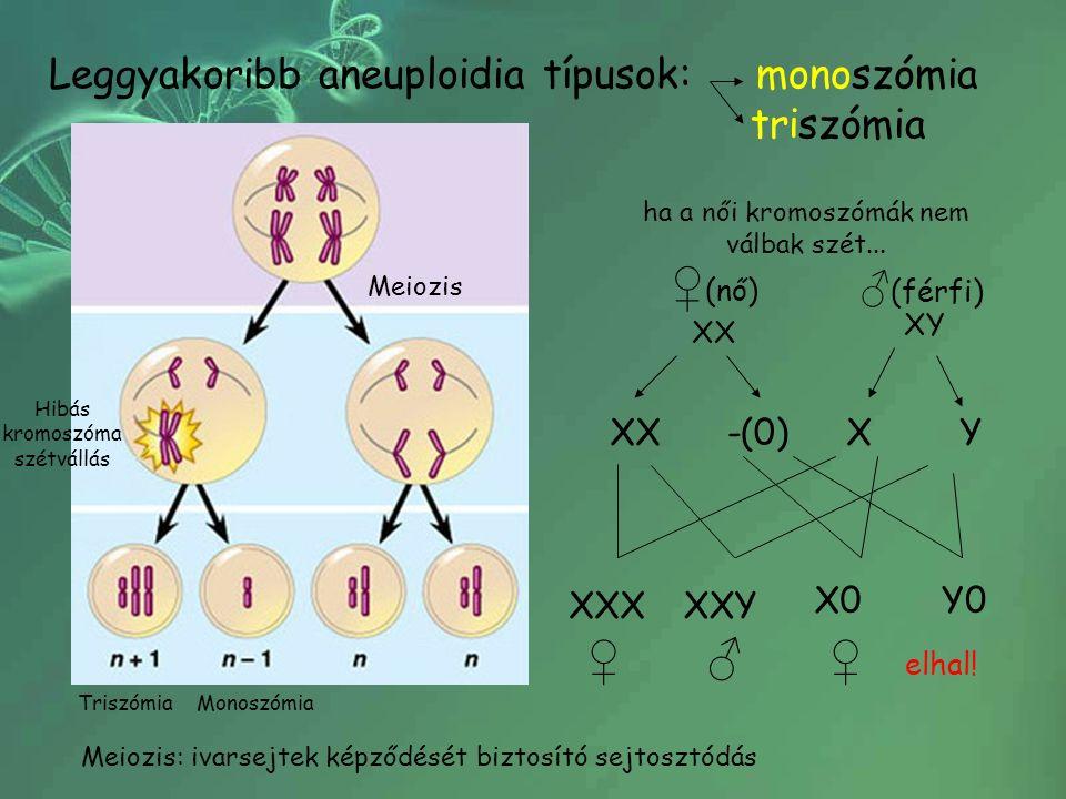 Leggyakoribb aneuploidia típusok: monoszómia triszómia Meiozis TriszómiaMonoszómia Hibás kromoszóma szétvállás Meiozis: ivarsejtek képződését biztosító sejtosztódás XX XY ♀ (nő) ♂ (férfi) XX-(0)XY ♀ ♂ ♀ elhal.