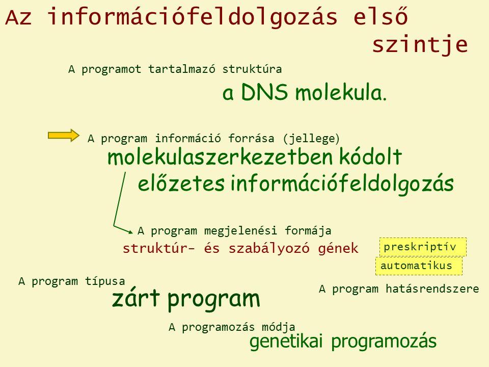 Az információfeldolgozás első szintje a DNS molekula.