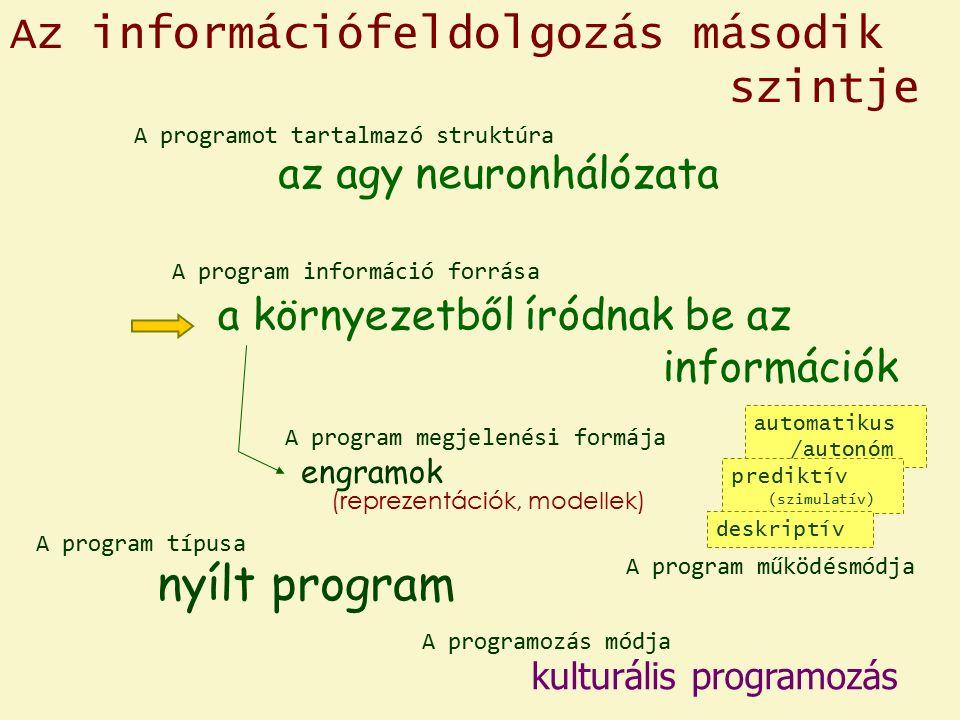 Az információfeldolgozás második szintje az agy neuronhálózata (reprezentációk, modellek) automatikus /autonóm prediktív (szimulatív) nyílt program a környezetből íródnak be az információk kulturális programozás A program megjelenési formája A program működésmódja engramok A program információ forrása A program típusa A programozás módja A programot tartalmazó struktúra deskriptív
