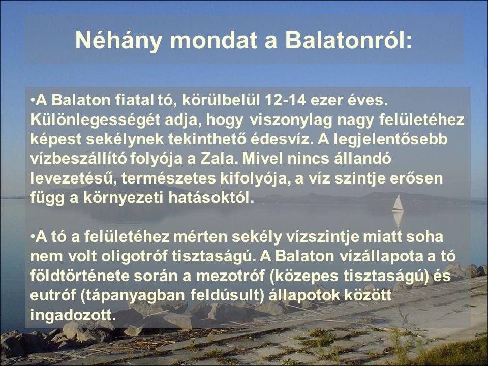 Néhány mondat a Balatonról: A Balaton fiatal tó, körülbelül 12-14 ezer éves. Különlegességét adja, hogy viszonylag nagy felületéhez képest sekélynek t