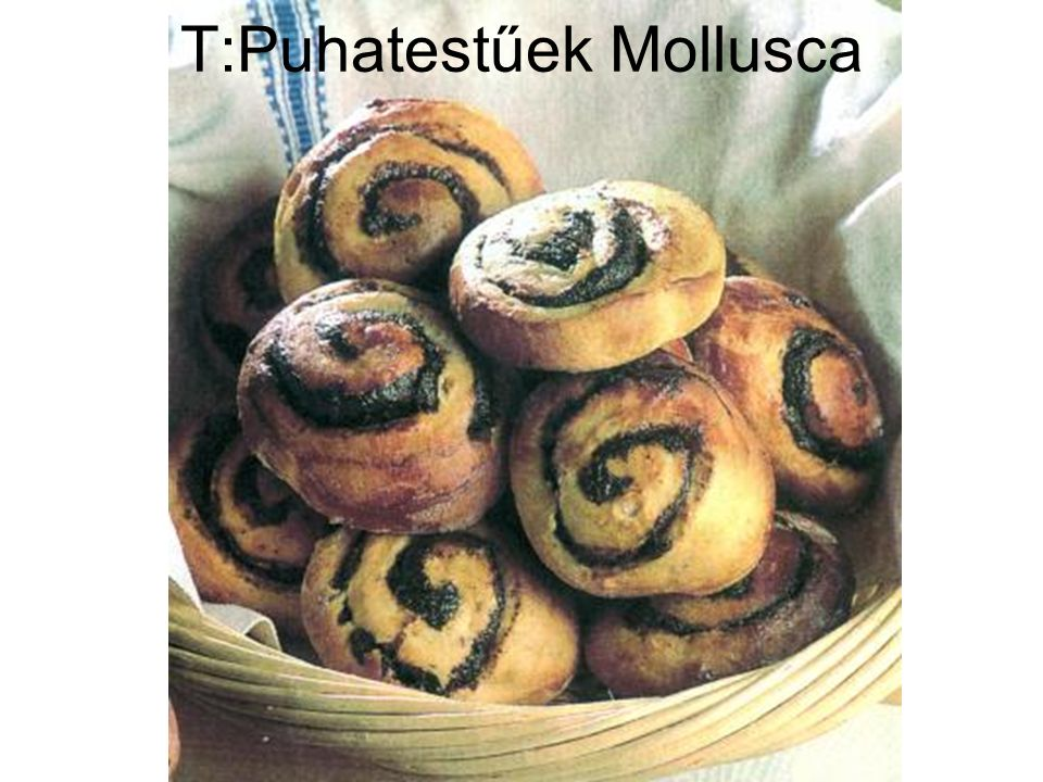 T:Puhatestűek Mollusca