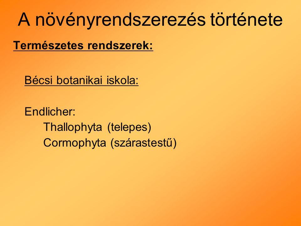 A növényrendszerezés története Természetes rendszerek: Bécsi botanikai iskola: Endlicher: Thallophyta (telepes) Cormophyta (szárastestű)