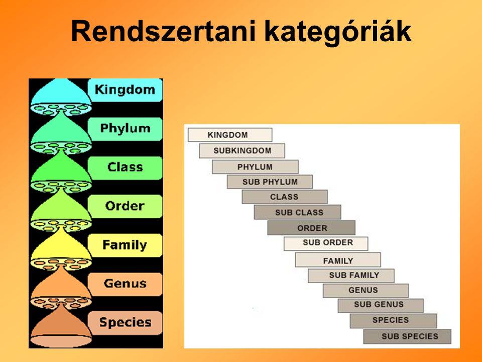 Rendszertani kategóriák