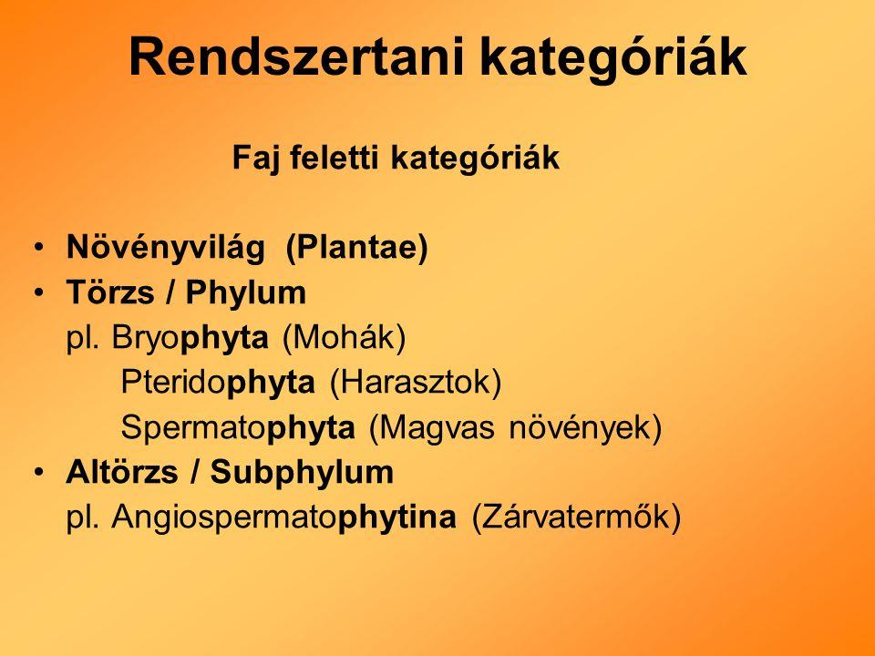 Faj feletti kategóriák Növényvilág (Plantae) Törzs / Phylum pl.