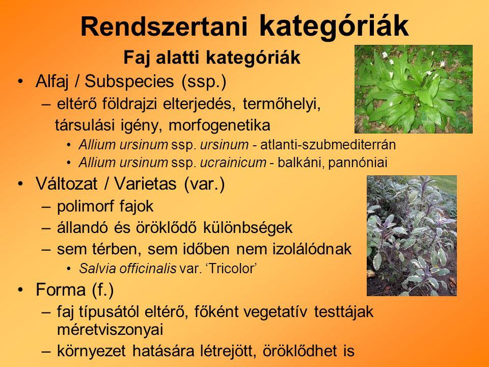 Rendszertani kategóriák Faj alatti kategóriák Alfaj / Subspecies (ssp.) –eltérő földrajzi elterjedés, termőhelyi, társulási igény, morfogenetika Allium ursinum ssp.
