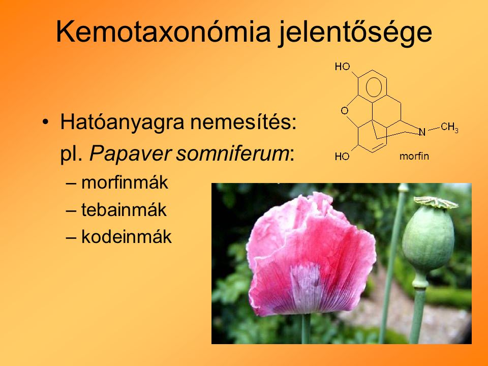 Kemotaxonómia jelentősége Hatóanyagra nemesítés: pl.