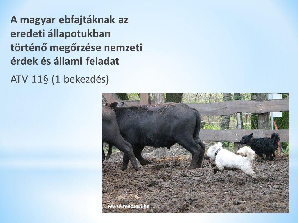 A magyar ebfajtáknak az eredeti állapotukban történő megőrzése nemzeti érdek és állami feladat ATV 11§ (1 bekezdés)