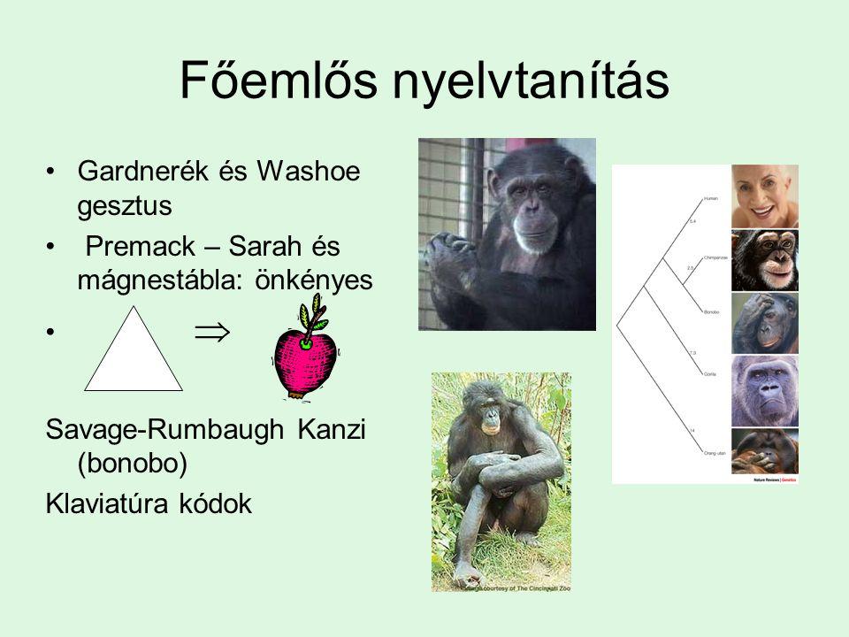 Főemlős nyelvtanítás Gardnerék és Washoe gesztus Premack – Sarah és mágnestábla: önkényes  Savage-Rumbaugh Kanzi (bonobo) Klaviatúra kódok