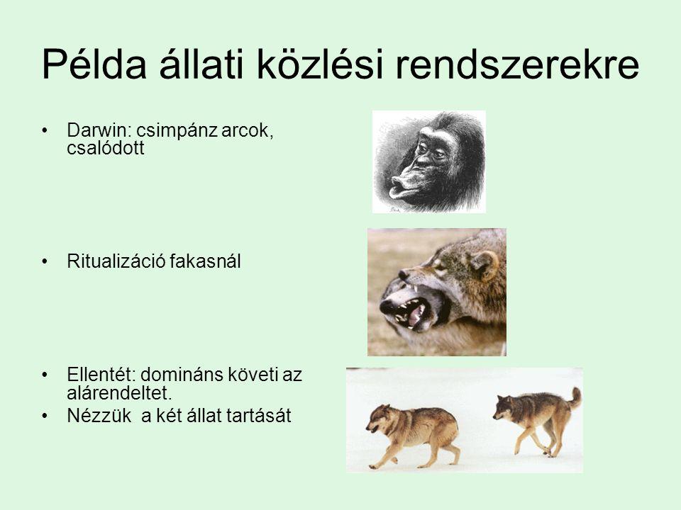 Baloldali halántéklebeny nagyobb A bal félteke egésze A planum temporale Ennek oka a több sík Orangután, pekingi előember, csecsemő, felnőtt