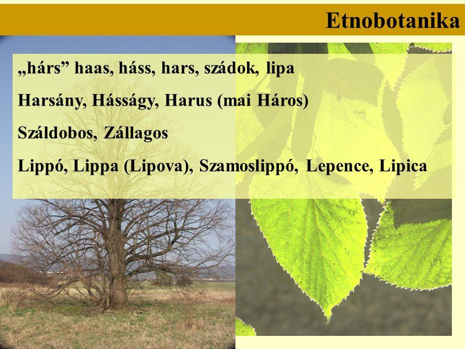 """Etnobotanika """"hárs haas, háss, hars, szádok, lipa Harsány, Hásságy, Harus (mai Háros) Száldobos, Zállagos Lippó, Lippa (Lipova), Szamoslippó, Lepence, Lipica"""