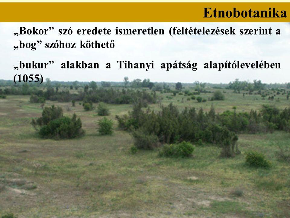 """Etnobotanika """"Bokor szó eredete ismeretlen (feltételezések szerint a """"bog szóhoz köthető """"bukur alakban a Tihanyi apátság alapítólevelében (1055)"""