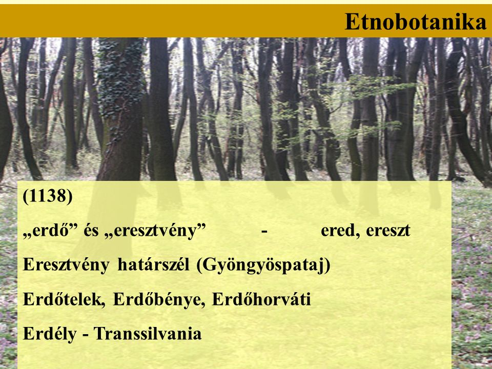 """Etnobotanika (1138) """"erdő és """"eresztvény - ered, ereszt Eresztvény határszél (Gyöngyöspataj) Erdőtelek, Erdőbénye, Erdőhorváti Erdély - Transsilvania"""