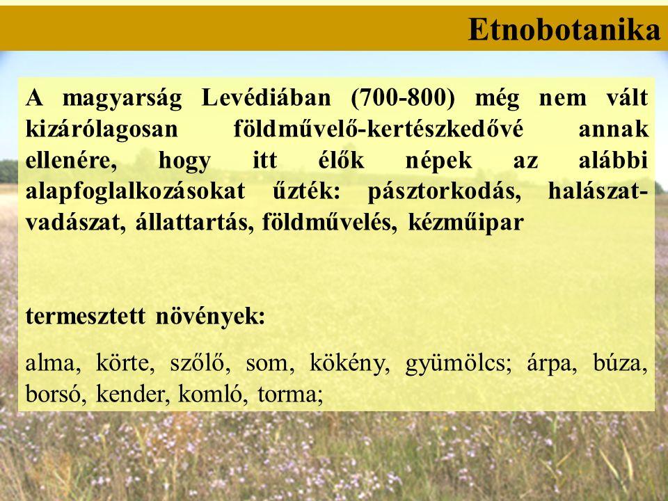 Etnobotanika A magyarság Levédiában (700-800) még nem vált kizárólagosan földművelő-kertészkedővé annak ellenére, hogy itt élők népek az alábbi alapfoglalkozásokat űzték: pásztorkodás, halászat- vadászat, állattartás, földművelés, kézműipar termesztett növények: alma, körte, szőlő, som, kökény, gyümölcs; árpa, búza, borsó, kender, komló, torma;