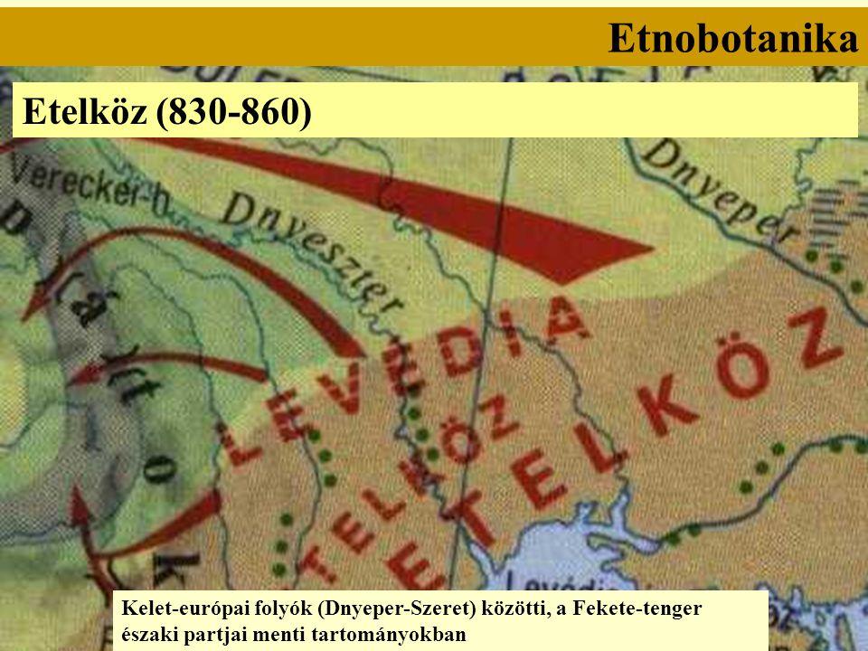 Etnobotanika Etelköz (830-860) Kelet-európai folyók (Dnyeper-Szeret) közötti, a Fekete-tenger északi partjai menti tartományokban