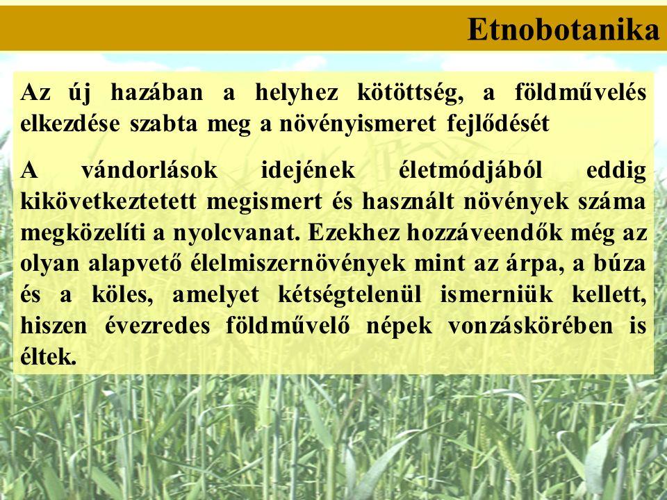 Etnobotanika Az új hazában a helyhez kötöttség, a földművelés elkezdése szabta meg a növényismeret fejlődését A vándorlások idejének életmódjából eddig kikövetkeztetett megismert és használt növények száma megközelíti a nyolcvanat.