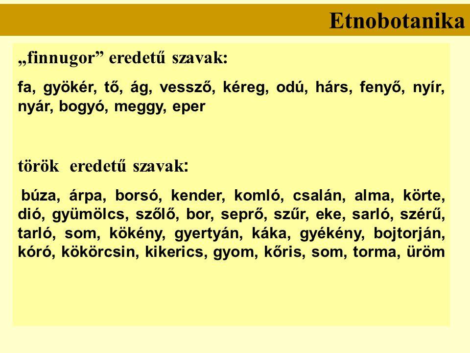 """Etnobotanika """"finnugor eredetű szavak: fa, gyökér, tő, ág, vessző, kéreg, odú, hárs, fenyő, nyír, nyár, bogyó, meggy, eper török eredetű szavak : búza, árpa, borsó, kender, komló, csalán, alma, körte, dió, gyümölcs, szőlő, bor, seprő, szűr, eke, sarló, szérű, tarló, som, kökény, gyertyán, káka, gyékény, bojtorján, kóró, kökörcsin, kikerics, gyom, kőris, som, torma, üröm"""