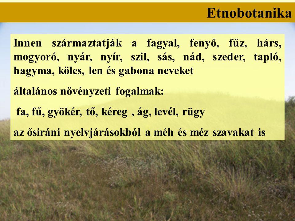 Etnobotanika Innen származtatják a fagyal, fenyő, fűz, hárs, mogyoró, nyár, nyír, szil, sás, nád, szeder, tapló, hagyma, köles, len és gabona neveket általános növényzeti fogalmak: fa, fű, gyökér, tő, kéreg, ág, levél, rügy az ősiráni nyelvjárásokból a méh és méz szavakat is