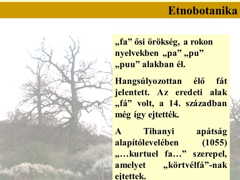"""Etnobotanika """"fa ősi örökség, a rokon nyelvekben """"pa """"pu """"puu alakban él."""