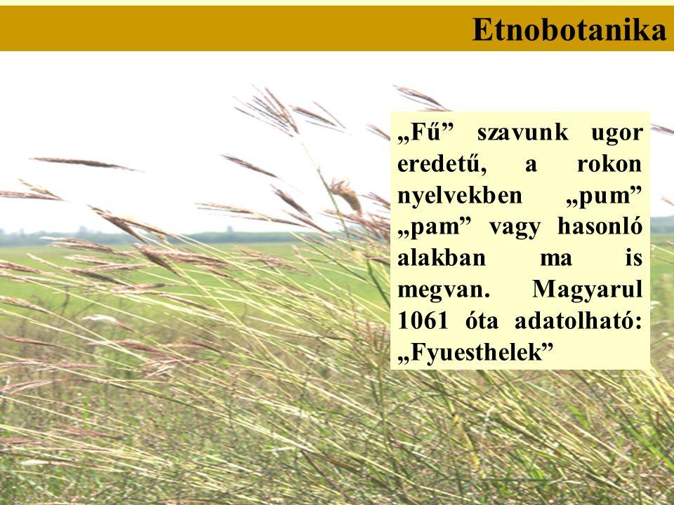 """Etnobotanika """"Fű szavunk ugor eredetű, a rokon nyelvekben """"pum """"pam vagy hasonló alakban ma is megvan."""
