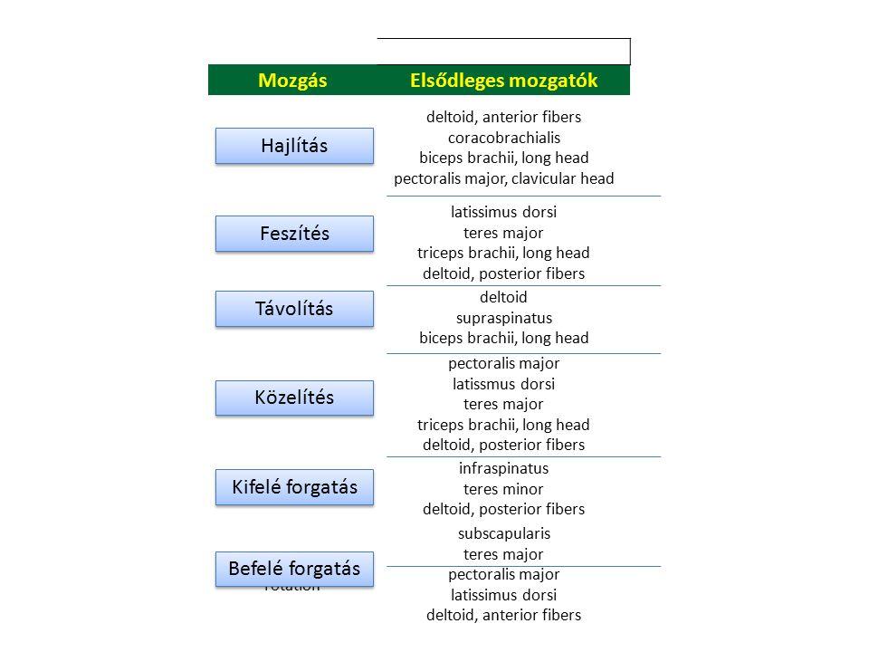 A rotátor köpeny izmai supraspinatus, subscapularis, Infraspinatus, teres minor supraspinatus, subscapularis, Infraspinatus, teres minor