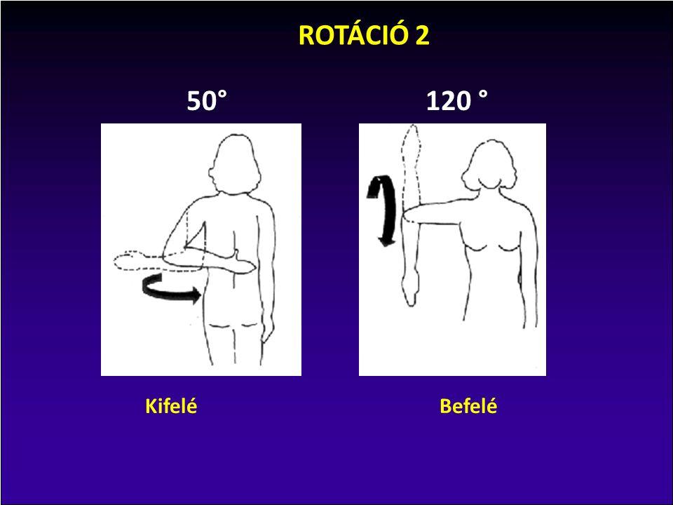 90° 70° 30°20° KifeléBefelé ROTÁCIÓ 1 A mozgáshatárokat az szabja meg, hogy befelé (előre) forgatáskor a kis gumó beleütközik az ízületi árok rostporcos szegélyébe (glenoid fossa), kifele (hátra) forgatáskor a nagy gumó az acromionba