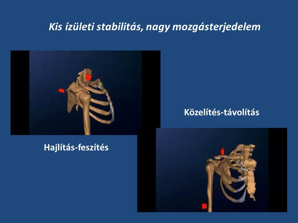 Acromioclavicularis Glenohumeralis Scapulothoracalis Sternoclavicularis Clavicula Scapula Humerus Sternum Csontok és ízületek