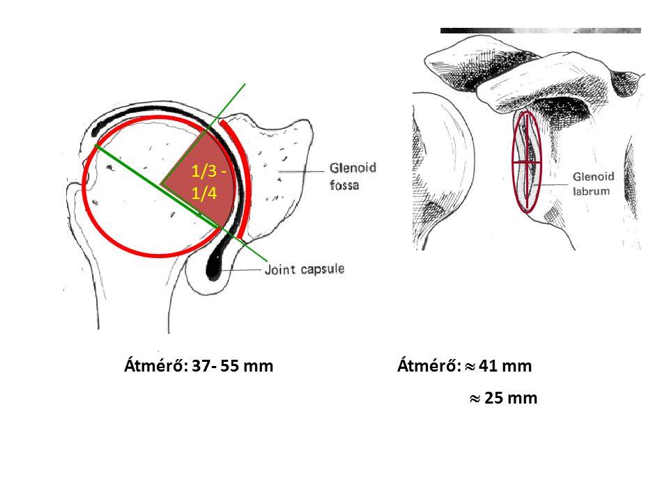 A glenohumeralis ízület fő mozgássíkjai Frontális Oldal Lapocka 30 - 45°