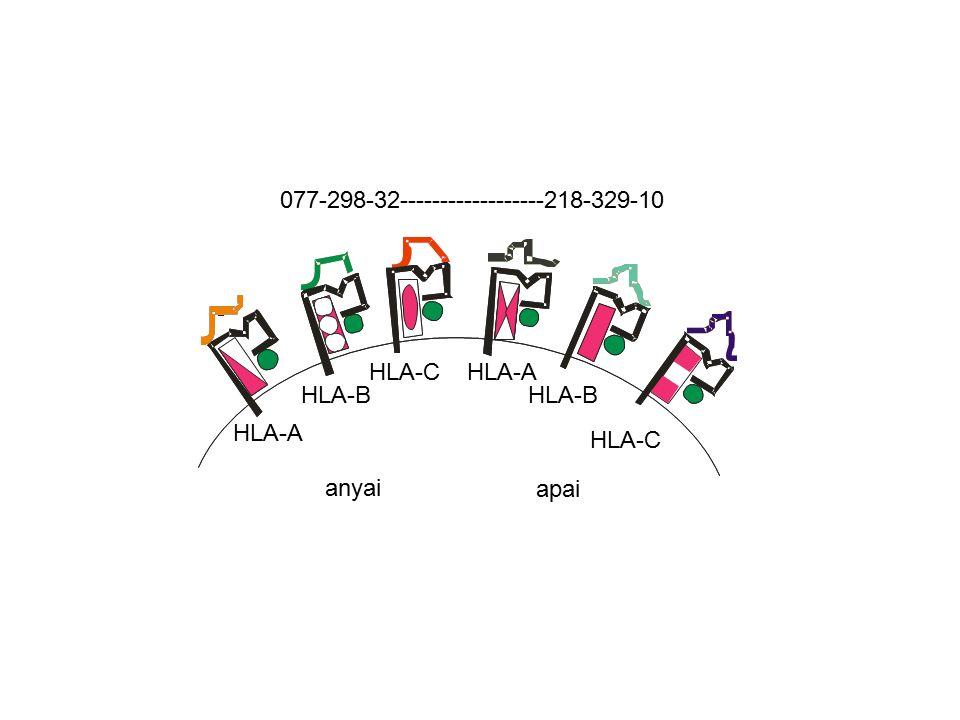 HLA-A HLA-B HLA-C 077-298-32------------------218-329-10 anyai HLA-C HLA-B HLA-A apai