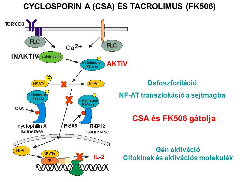 CYCLOSPORIN A (CSA) ÉS TACROLIMUS (FK506) INAKTIV AKTÍV Defoszforiláció NF-AT transzlokáció a sejtmagba Gén aktiváció Citokinek és aktivációs molekulák CSA és FK506 gátolja IL-2