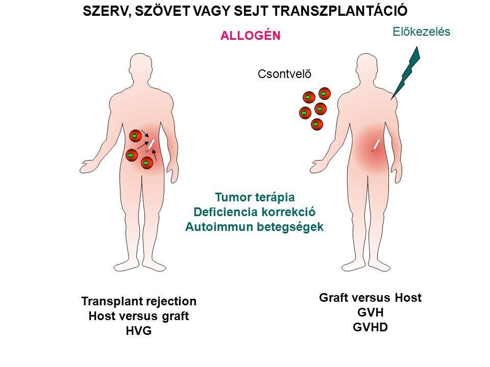 SZERV, SZÖVET VAGY SEJT TRANSZPLANTÁCIÓ ALLOGÉN Csontvelő Transplant rejection Host versus graft HVG Graft versus Host GVH GVHD Előkezelés Tumor terápia Deficiencia korrekció Autoimmun betegségek