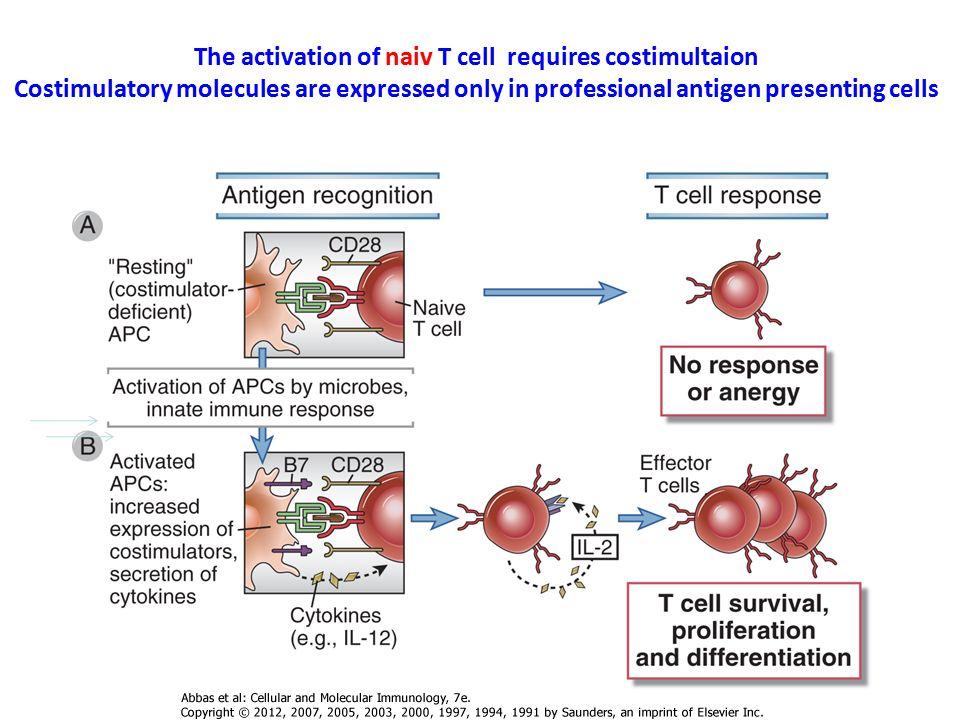 Graft versus host reaction GVH Graft versus host disease – GVHD Krónikus és szisztémás A csontvelői érett T sejtek reagálnak a recipiens sejtjeivel A donor T sejtek eltávolítása megelőzi a GVHD A donor T sejtek eltávolítása csökkenti az anti–leukémia hatást Ilyen probléma nem merül fel a SCID betegek korrekciós átültetésekor CSONTVELŐ ÁTÜLTETÉS Recipiens APC Graft-donor T Graft-donor T Recipiens peptid Graft versus Host reakció