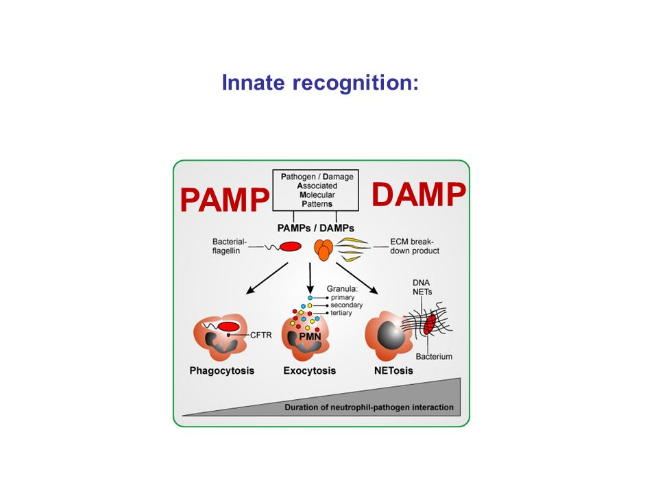 PAMP DAMP Innate recognition: