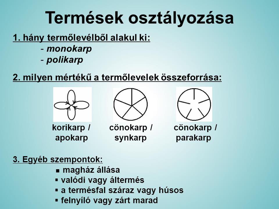 Termések osztályozása 1. hány termőlevélből alakul ki: - monokarp - polikarp 2. milyen mértékű a termőlevelek összeforrása: 3. Egyéb szempontok: ■ mag
