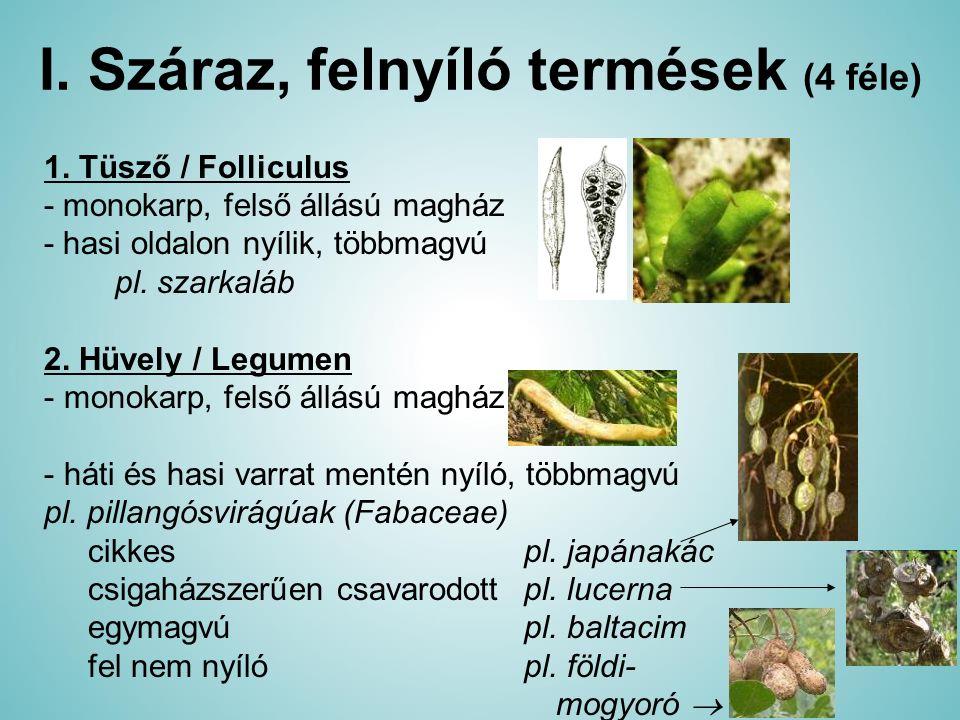 I. Száraz, felnyíló termések (4 féle) 1. Tüsző / Folliculus - monokarp, felső állású magház - hasi oldalon nyílik, többmagvú pl. szarkaláb 2. Hüvely /