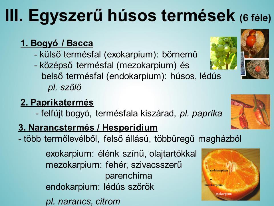 III. Egyszerű húsos termések (6 féle) 1. Bogyó / Bacca - külső termésfal (exokarpium): bőrnemű - középső termésfal (mezokarpium) és belső termésfal (e