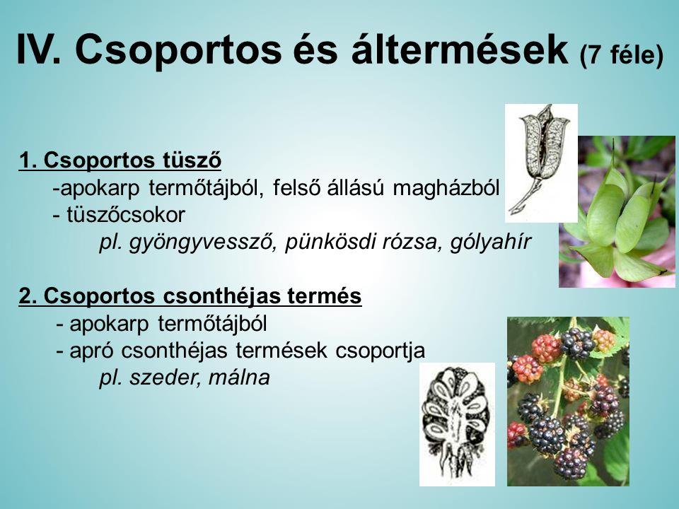 IV. Csoportos és áltermések (7 féle) 1. Csoportos tüsző -apokarp termőtájból, felső állású magházból - tüszőcsokor pl. gyöngyvessző, pünkösdi rózsa, g