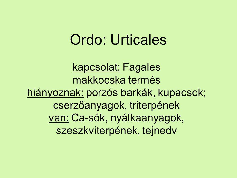 Ordo: Urticales kapcsolat: Fagales makkocska termés hiányoznak: porzós barkák, kupacsok; cserzőanyagok, triterpének van: Ca-sók, nyálkaanyagok, szeszkviterpének, tejnedv