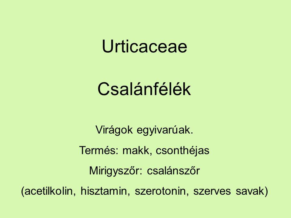 Urticaceae Csalánfélék Virágok egyivarúak.