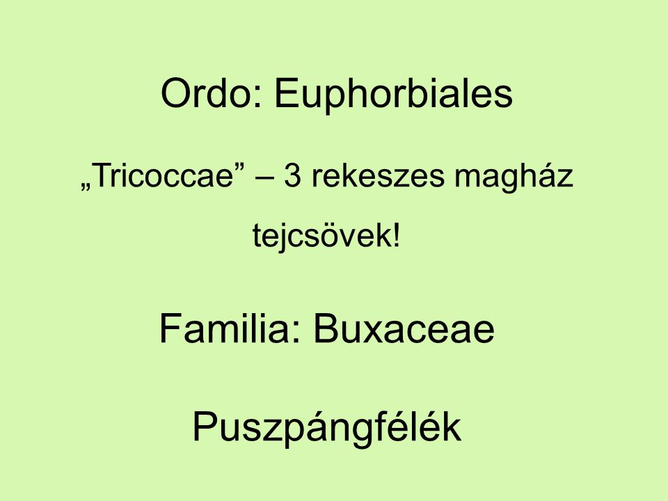 """Ordo: Euphorbiales """"Tricoccae – 3 rekeszes magház tejcsövek! Familia: Buxaceae Puszpángfélék"""