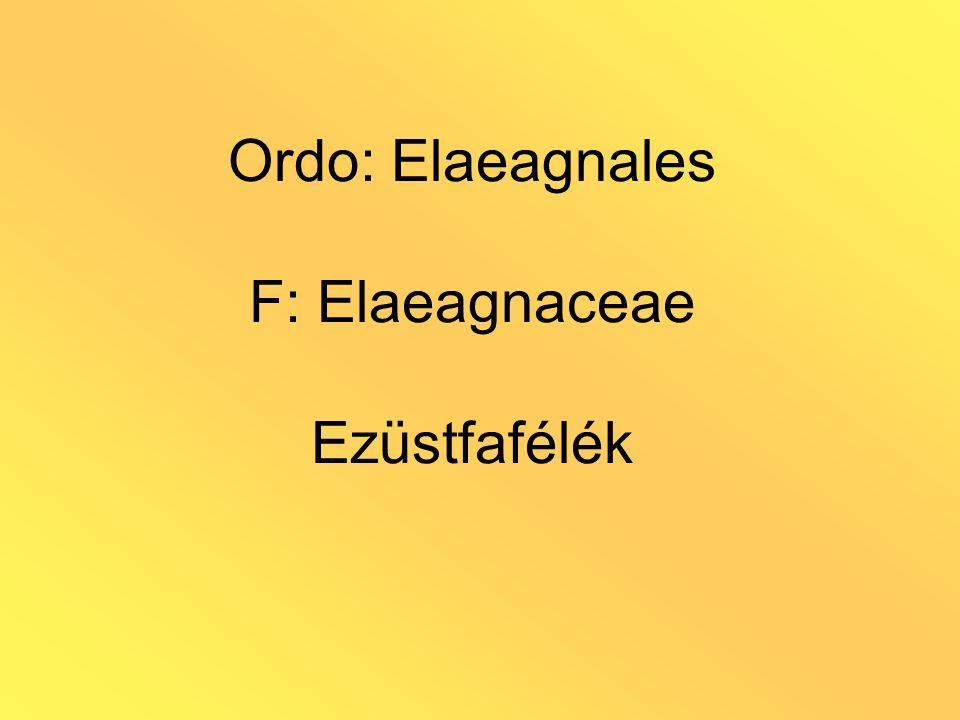 Ordo: Elaeagnales F: Elaeagnaceae Ezüstfafélék