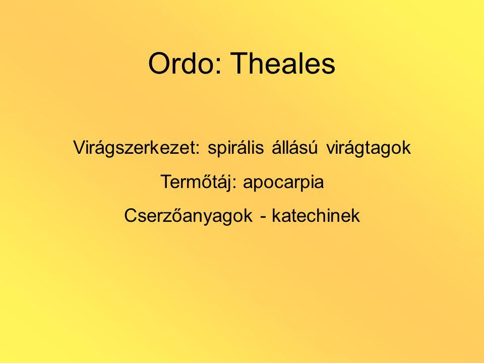 Ordo: Theales Virágszerkezet: spirális állású virágtagok Termőtáj: apocarpia Cserzőanyagok - katechinek
