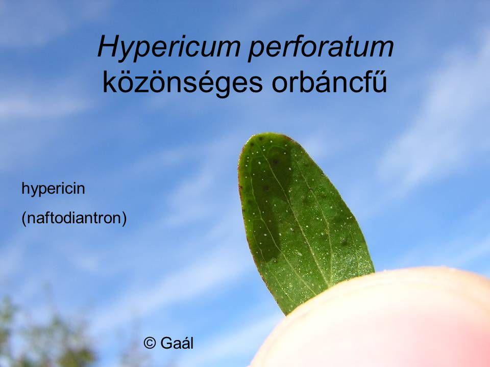 © Gaál hypericin (naftodiantron)