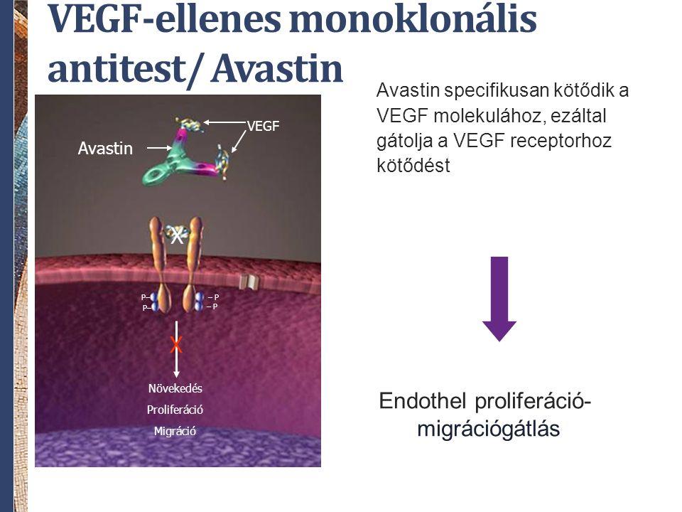 VEGF-ellenes monoklonális antitest/ Avastin Avastin specifikusan kötődik a VEGF molekulához, ezáltal gátolja a VEGF receptorhoz kötődést Avastin – P P– VEGF X Növekedés Proliferáció Migráció X Endothel proliferáció-, migrációgátlás