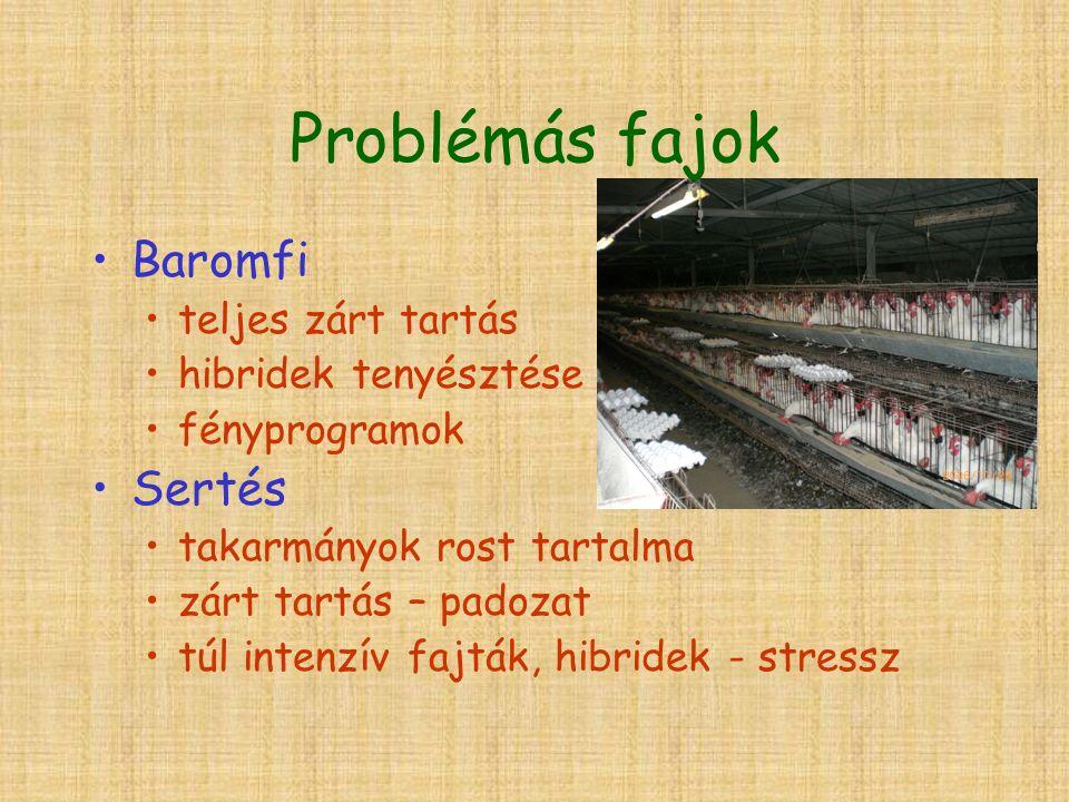 Problémás fajok Baromfi teljes zárt tartás hibridek tenyésztése fényprogramok Sertés takarmányok rost tartalma zárt tartás – padozat túl intenzív fajták, hibridek - stressz